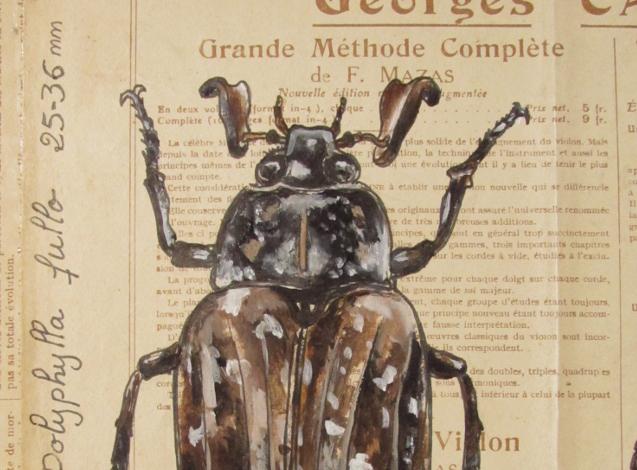 Exposition «En mode Insectes»