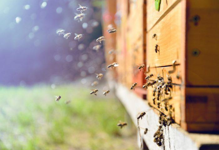 Atelier Abeilles et apiculture